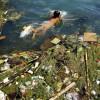kina vatten föroreningar miljö